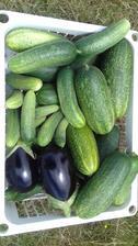 Baklažány a mega uhorky