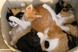 Čistá mačička pics