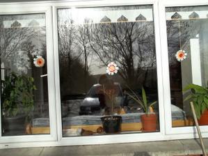 nase okno v obyvaku -  - mame tie kveitocky 3 nech jednemu nie je smutno