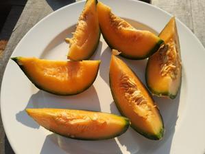 Posledný sladký šťavnatý melón odtrhnutý 9.10.
