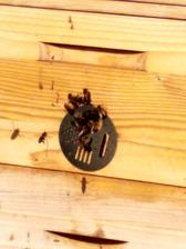 Včielky bzučali jedna radosť 😍