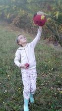 piatok ešte oberačka jabĺk s Lenkou Školienkou