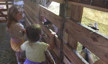 Na kozej farme