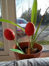 stara znama klasika - tulipany z vajicok