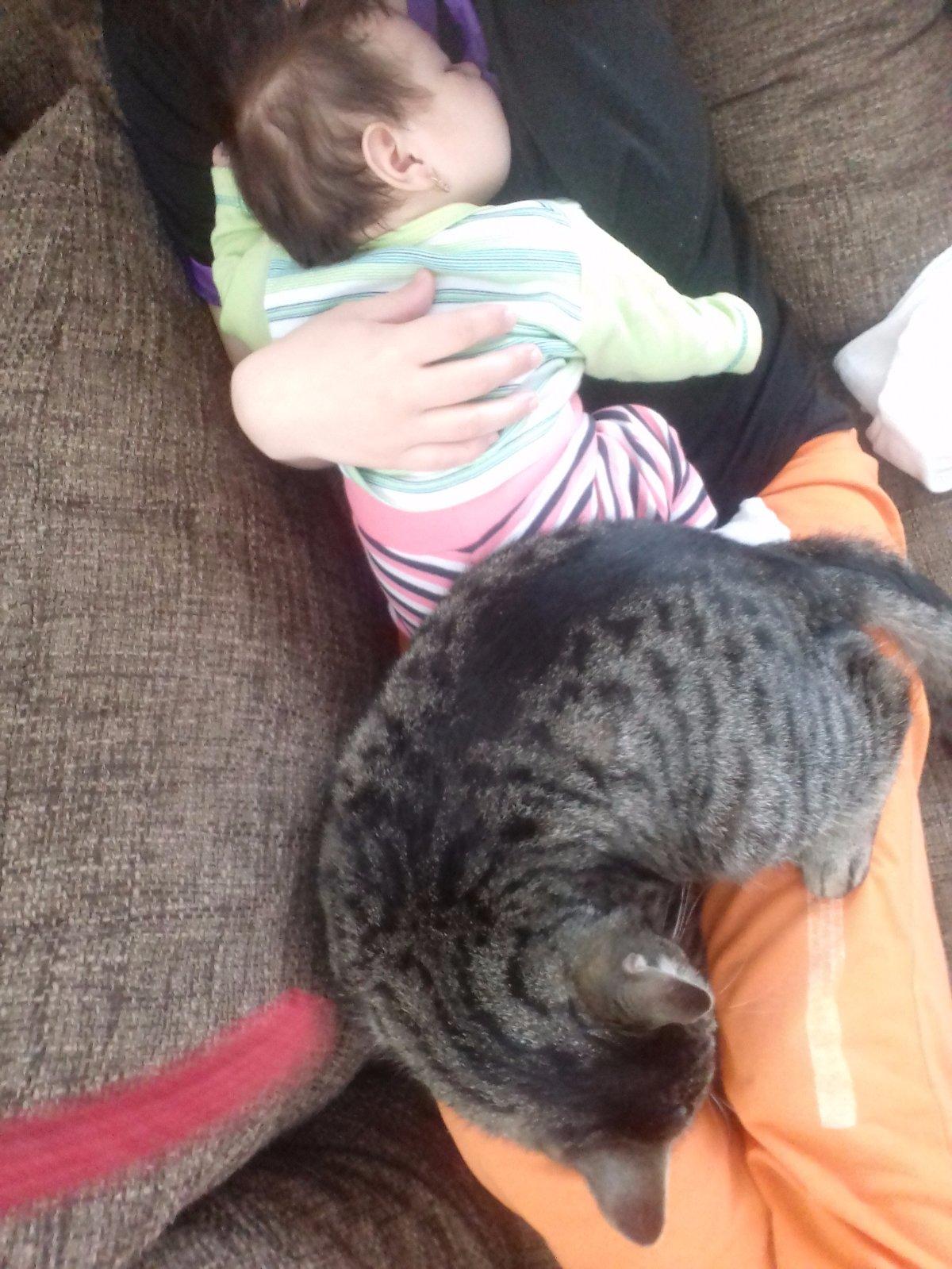chlpaté mačička hajzel