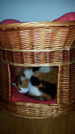 Zadok mačička