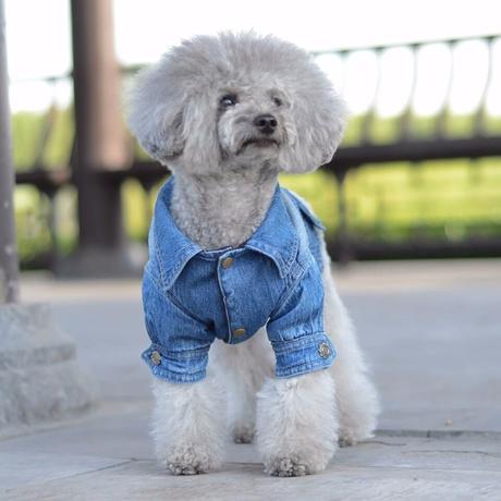 Predám riflovu bundu pre psa 34ed58a548a