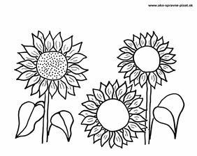 Slnečnica - Dokresli semienka slnečniciam podľa predlohy.