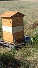 Pribudli k nám aj včielky na záhrade 🐝❤
