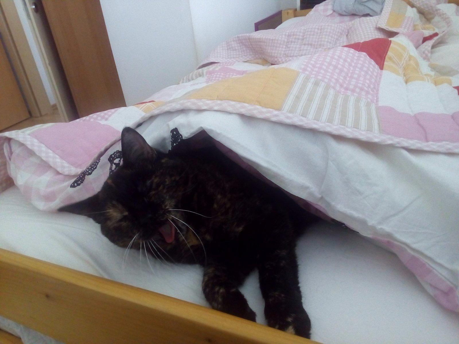 mokré hnedé mačička